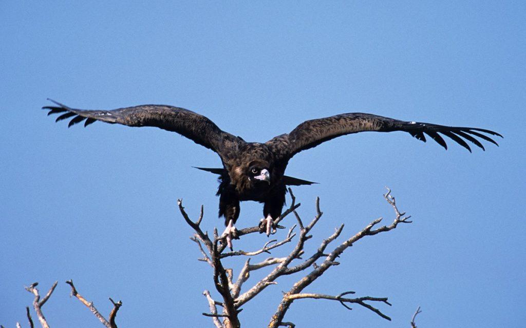 Greece Fall birding tours