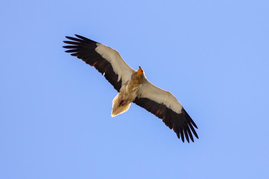 Andalusia, Spain birding tours