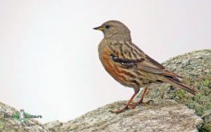 Georgia birding tours