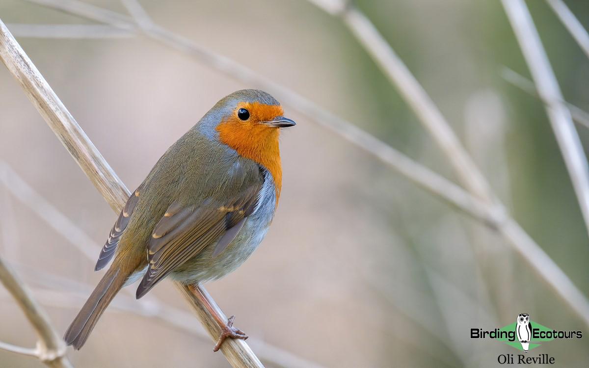 New Birding Ecotours office