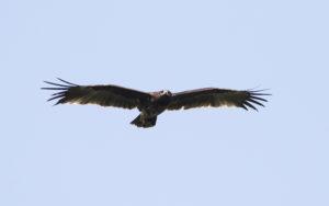 Azerbaijan birding tours