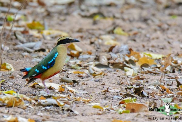 Mozambique birding blog