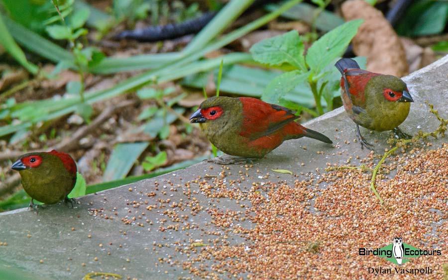 Mozambique birding blog