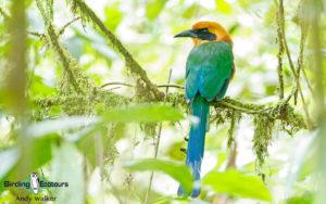 Panama birding tours