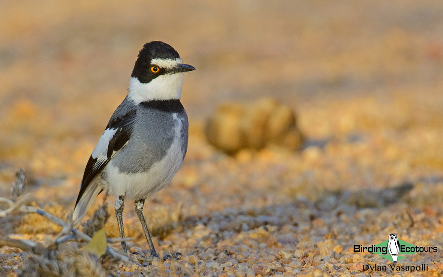 Birding Africa: how to bird the continent strategically