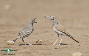 Israel birding tours