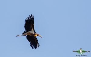 Nepal birding tours
