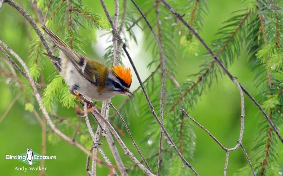 Birding in Norfolk
