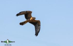 United Kingdom birding tours