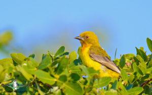 Southern Mozambique birding tours