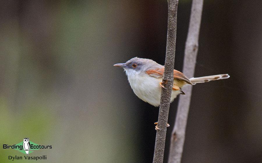 Mozambique birding tours