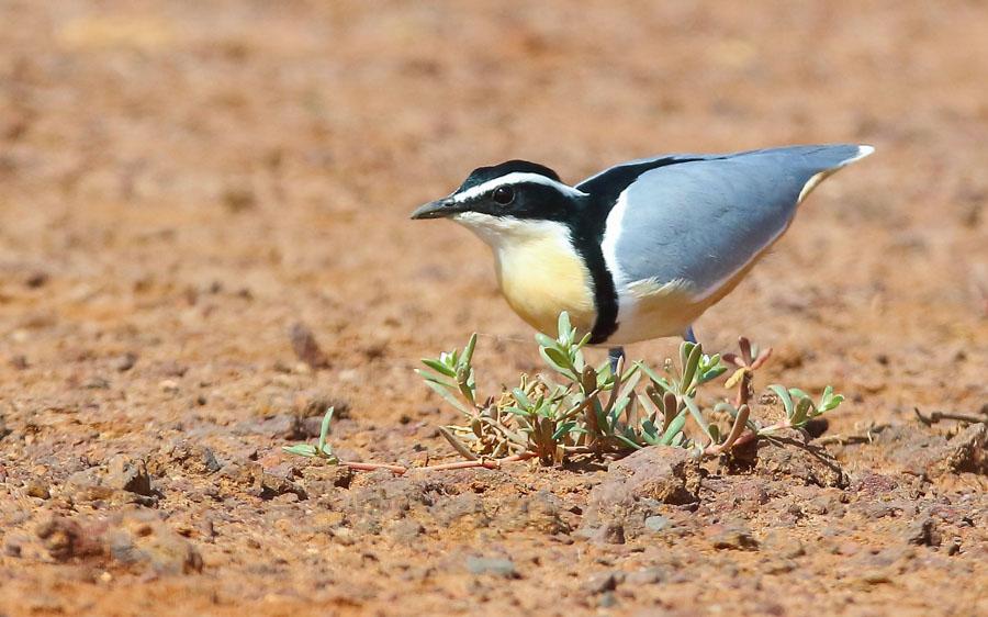 Gambia birding tours