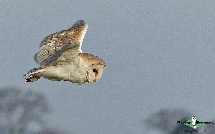 Year birding Norfolk