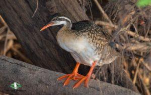 Senegal birding tour