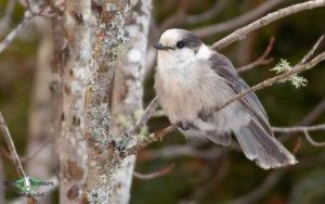 Oregon birding tours