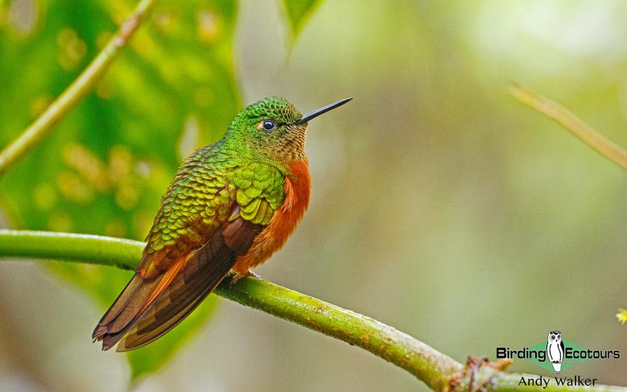 southern-ecuador-birding
