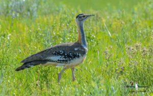 Flock: Highveld extensions
