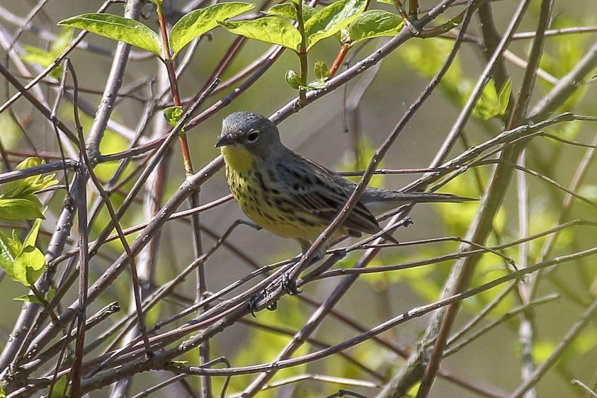 Ohio birding day tours