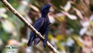 Southern Ecuador birding tour