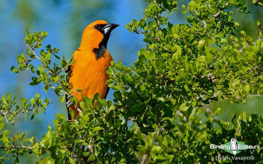 Texas winter birding tours