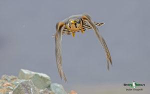 Peru birding tour