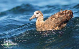 Japan pelagic extension