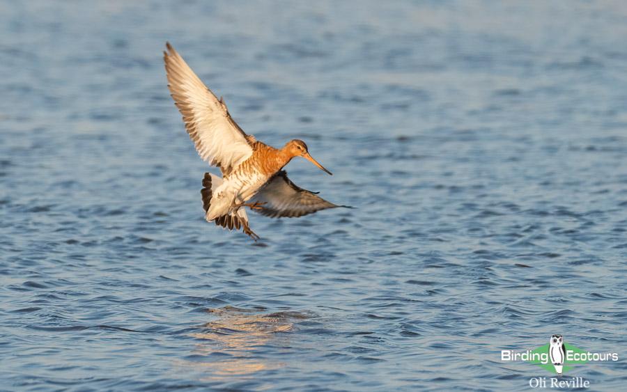 Suffolk birding