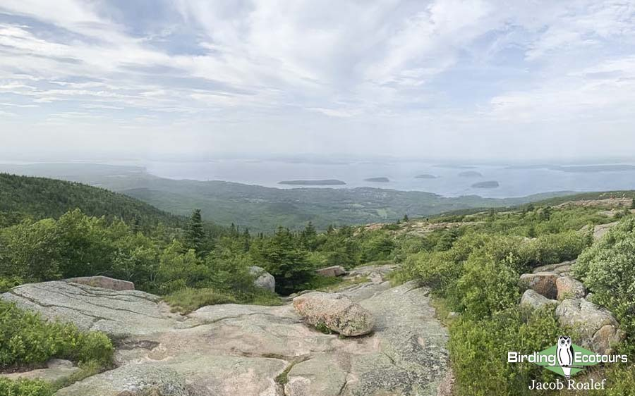 Maine trip report