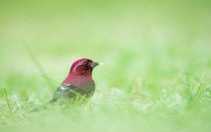 Taiwan birding tours
